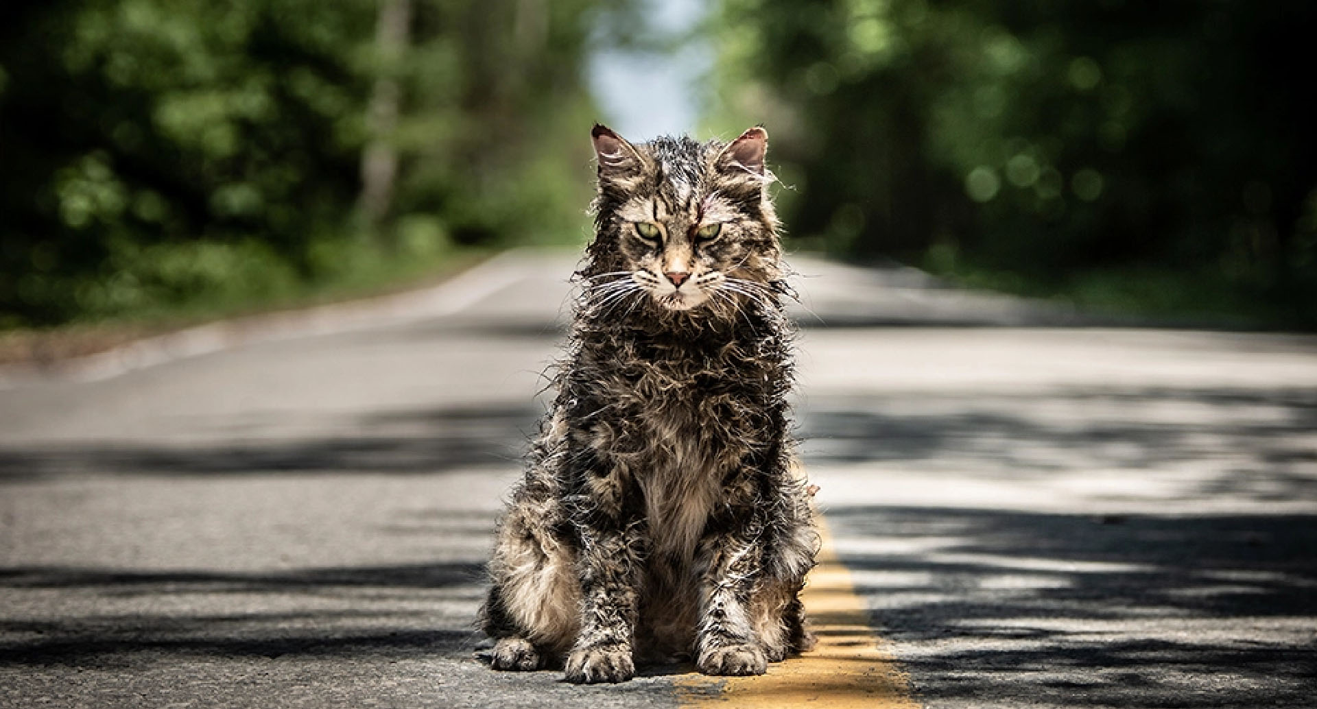 Movie Review – Pet Sematary