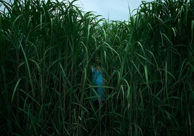 Netflix In the Tall Grass Trailer